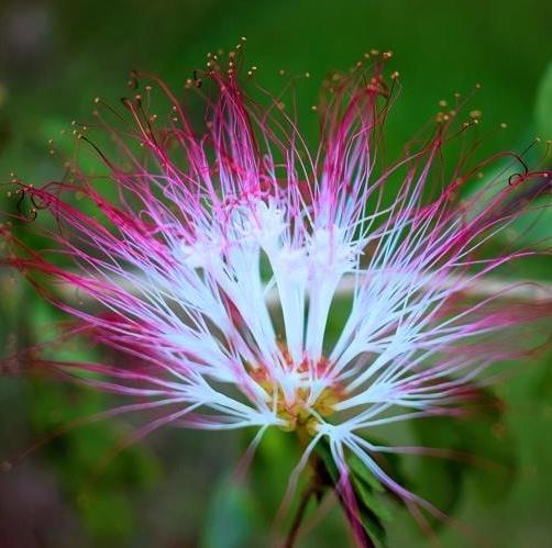 florir consciencia